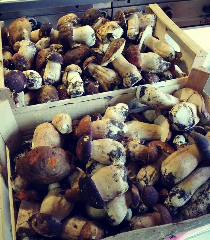 Boletus, Photo taken by Restaurant Tomažići